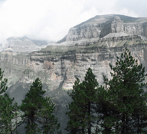 Coniferous Forest Beside a Large Canyon