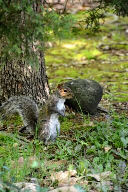 squirrels essay