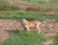 Cody_dog park
