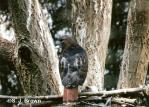 Blog Hawk