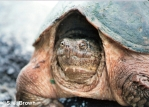 Blog Turtle