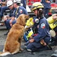hero dog_911