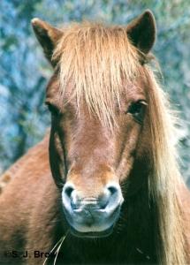 5 Horse