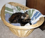 bailey basket