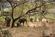 Lake-Manyara-Elephants-and-Baboons