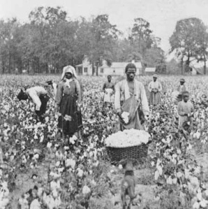 Here's an actual mid-19th century photo of slaves in a cotton field. Hard work... I know friends in North Carolina who picked cotton as teenagers.