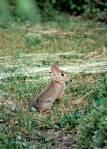 2 Rabbit