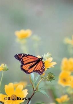 december-butterfly-vertical