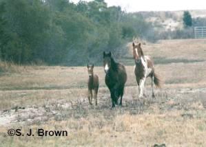 december-horses-horizontal