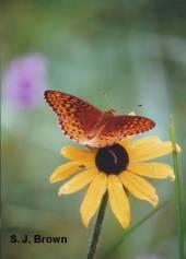1-butterfly-1