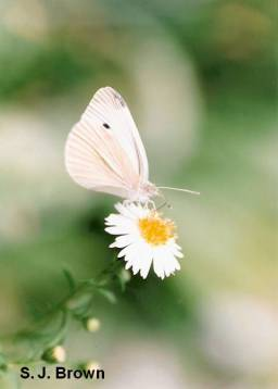 3-butterfly-3