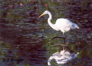 5-heron