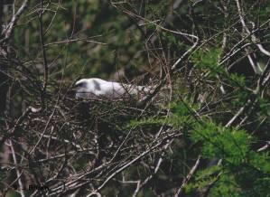 sjbrown 2 Egret