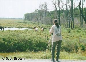 SJBrown with Ponies