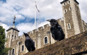 Ravens 1